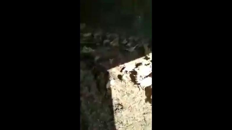 В Ростовской области на обанкротившейся птицеферме «Евродон» раздавили индеек бульдозером