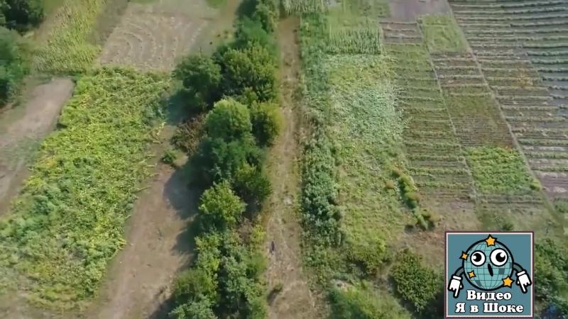 Украинский киберпанк: чувак, своровавший кукурузу бежит от дрона, охраняющего поле