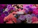 NYUSHA / НЮША - Наедине (Official Clip) HD