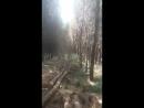 Лесоруб