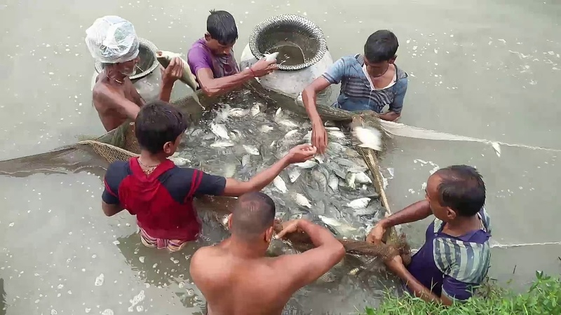 Wow What a Amazing Fishing -Bangladesh(1).