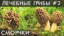 ГРИБ СМОРЧОК Сморчки Уникальные лечебные свойства высших грибов Фролов Ю А