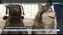 Новости на Россия 24 • Алтайская сказка чем регион может удивить туристов