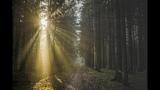 Лобненский лес. Sony A7m3, Mavic 2 zoom