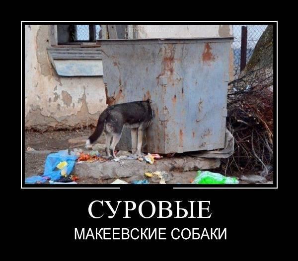 http://cs614630.vk.me/v614630795/1cca3/K74ExCanOwk.jpg