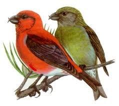 Птицы наши друзья 2010 год Стихи о птицах Пингвин.