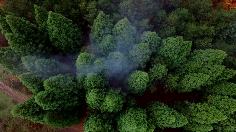 Роща тысячелетних секвой