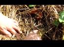 Семья Бровченко. Эксперимент - необычная посадка картошки. №3. Какой же результат