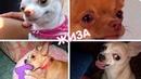 ПРИКОЛЫ С ЖИВОТНЫМИ, приколы с собаками подборка FUN WITH ANIMALS, funny dogs compilation 422