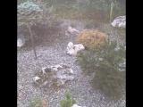 Прогулки по саду.5