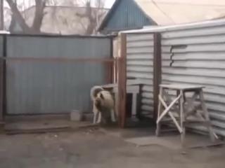 Собака танцует под Modern Talking