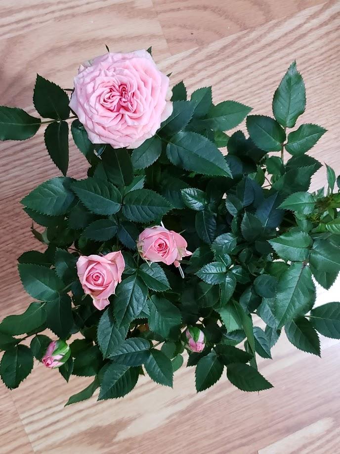 """Мои цветочки ... Занятие для души)))""""  - Страница 2 C5dhoCgp7Uk"""