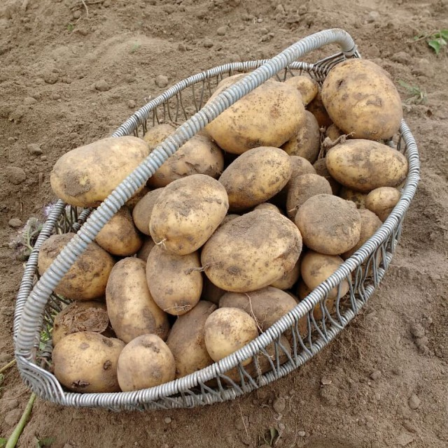 Про картошку