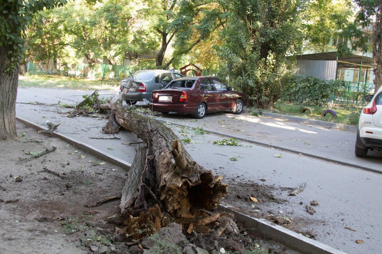 В Таганроге многолетнее дерево раздавило два автомобиля