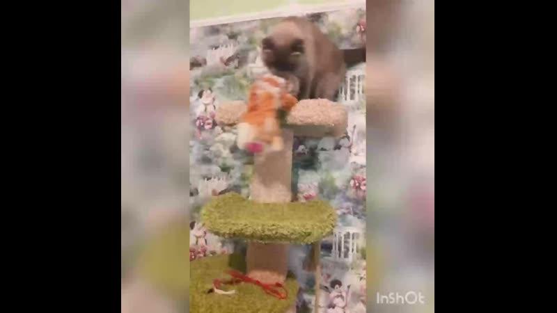Кот и подруга😺
