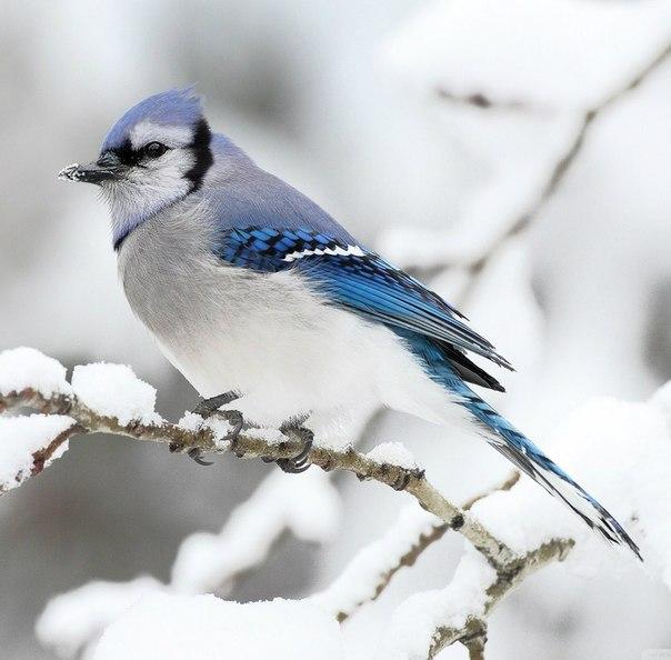 Красивая птичка.