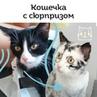 """Видео про животных on Instagram """"Витилиго встречается у животных реже, чем у людей, но болезнь превратила кошку Элли в красавицу с очень необычной..."""