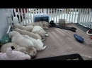 Nursery at Warrior Canine Connection powered by