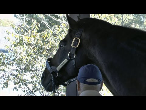 The Incomparable Cigar (1990 - 2014)