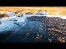 Рыбалка в Якутии, Мунха — зимний подледный вылов карася неводом