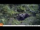 Медведи на Столбах