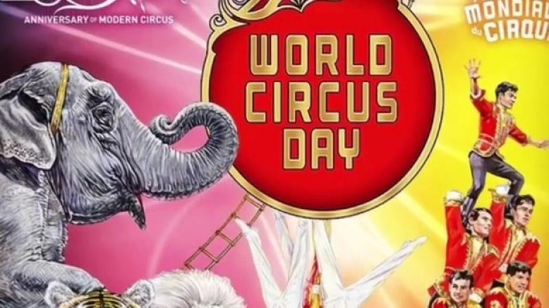 Московский Цирк Никулина (@circus_nikulin) • Фото и видео в Instagram