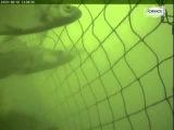 Подводные Камеры для Лова Рыбы. Сетевые орудия лова. Промышленное рыболовство.