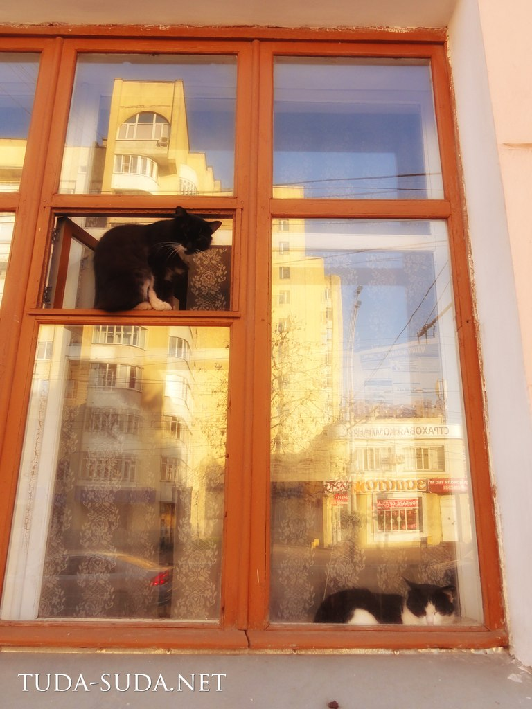Коты, тамбов
