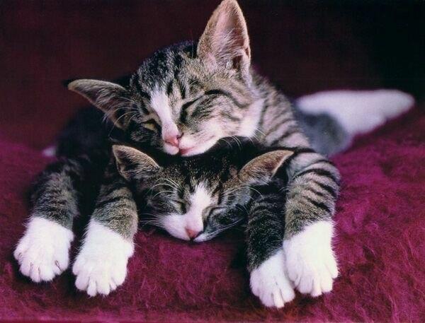 Коты или кошки которые живут в