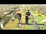 Формула качества - Как выбрать качественную цветочную рассаду