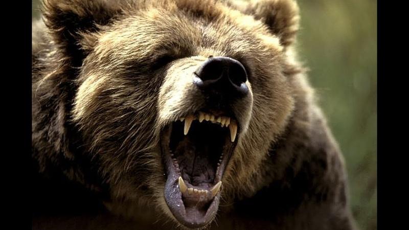 ნადირობა | დათვზე