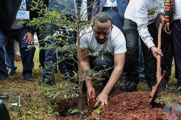 Рекорд, которым стоит гордиться: в Эфиопии люди совершенно разных социальных слоев и мировоззрений высадили более 350 саженцев за 12 часов Такой широкий отклик получила инициатива «Зеленое