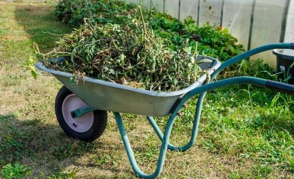Что делать с растительными остатками?