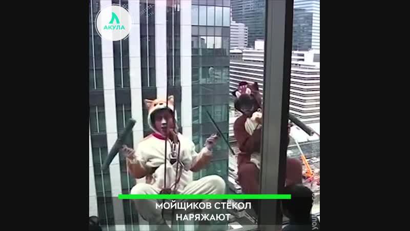 Мойщики окон | АКУЛА