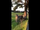 Коровка Мурка🇩🇪