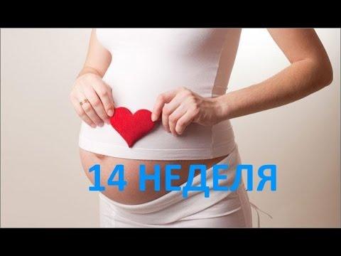 14 четырнадцатая неделя беременности