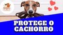 Coleira e Guia Podem Salvar a Vida do Seu Cachorro