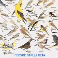 Птицелов и певчие птицы vk