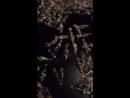 Набор семечки в глазури
