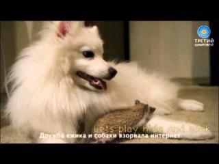 Дружба ёжика и собаки взорвала интернет