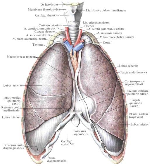 Признаки и симптомы отека легких, диагностика и лечение