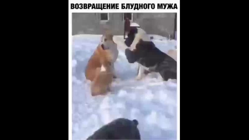 Video 50339531703f53d6104b2f0671311f8f