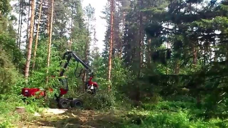 Харвестер - лесозаготовительный комбайн в работе / Harvester - the logging machine