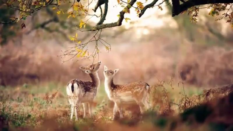 Природа прекрасна