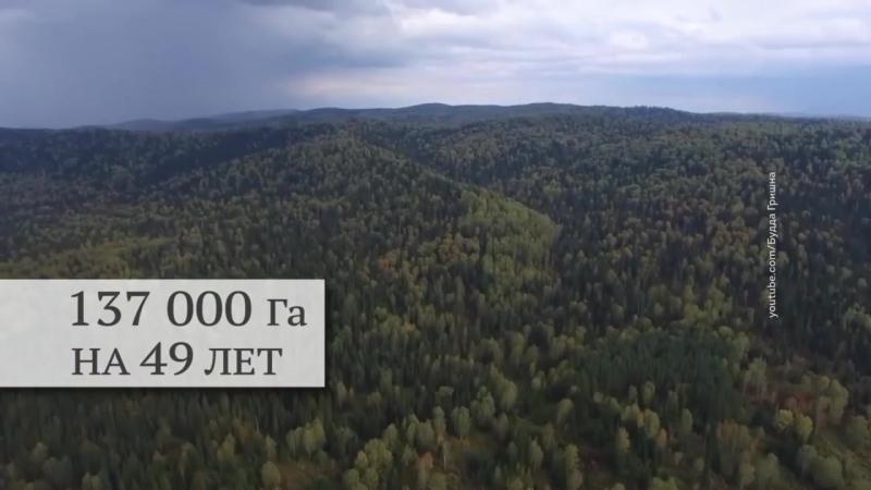 Михалков китайцы взяли в аренду 137 000 ГА Тайги в Томской области на 49 лет за 1млрд 260 млн р хотя реальная стоимость