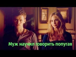► Klaus and Caroline (+Damon, Stefan, Alaric)║ Муж научил говорить попугая