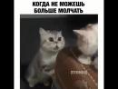 Видео Вайны on Instagram_ _Действуй -- Подписывайс.mp4