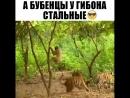 Троллинг 90 лвл