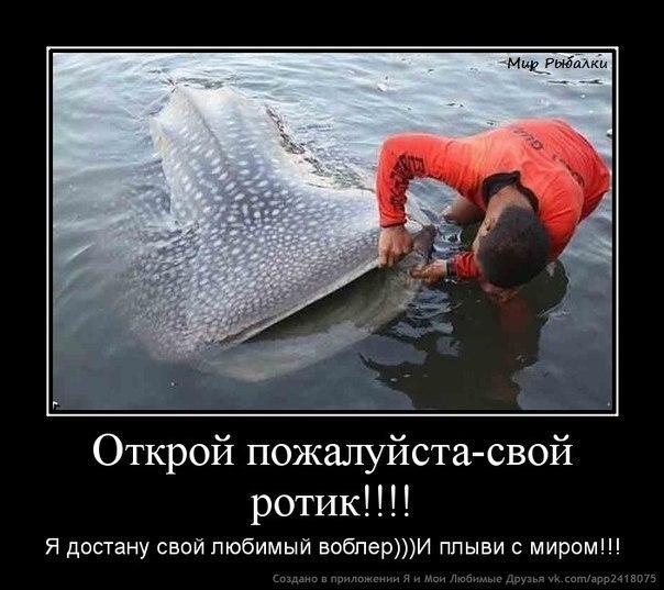 рыбацкий статус