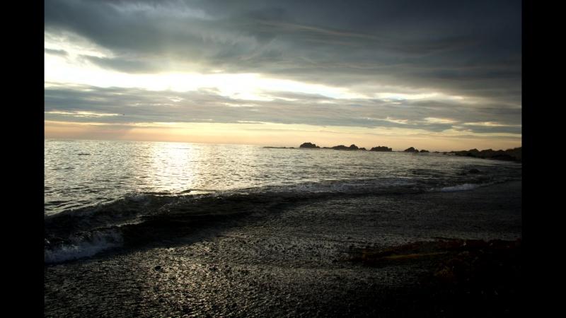 Длинноногая Ладушка у моря в поиске крабов-рыбы, рыбы-крабов....